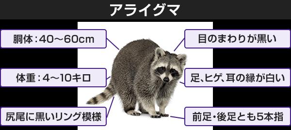 アライグマの画像 p1_36